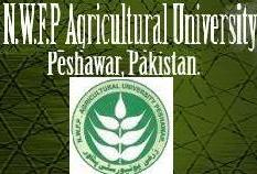 Peshawar: 11th Day of IBMS Agricultural University teachers strike
